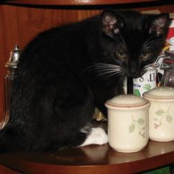Punky Kitten
