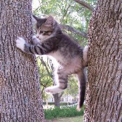Kitten War!